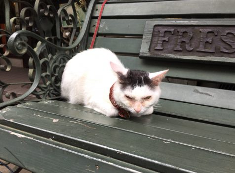 看板猫がお出迎え。クラシカルでアンティークな喫茶店@カフェアルル(新宿三丁目)